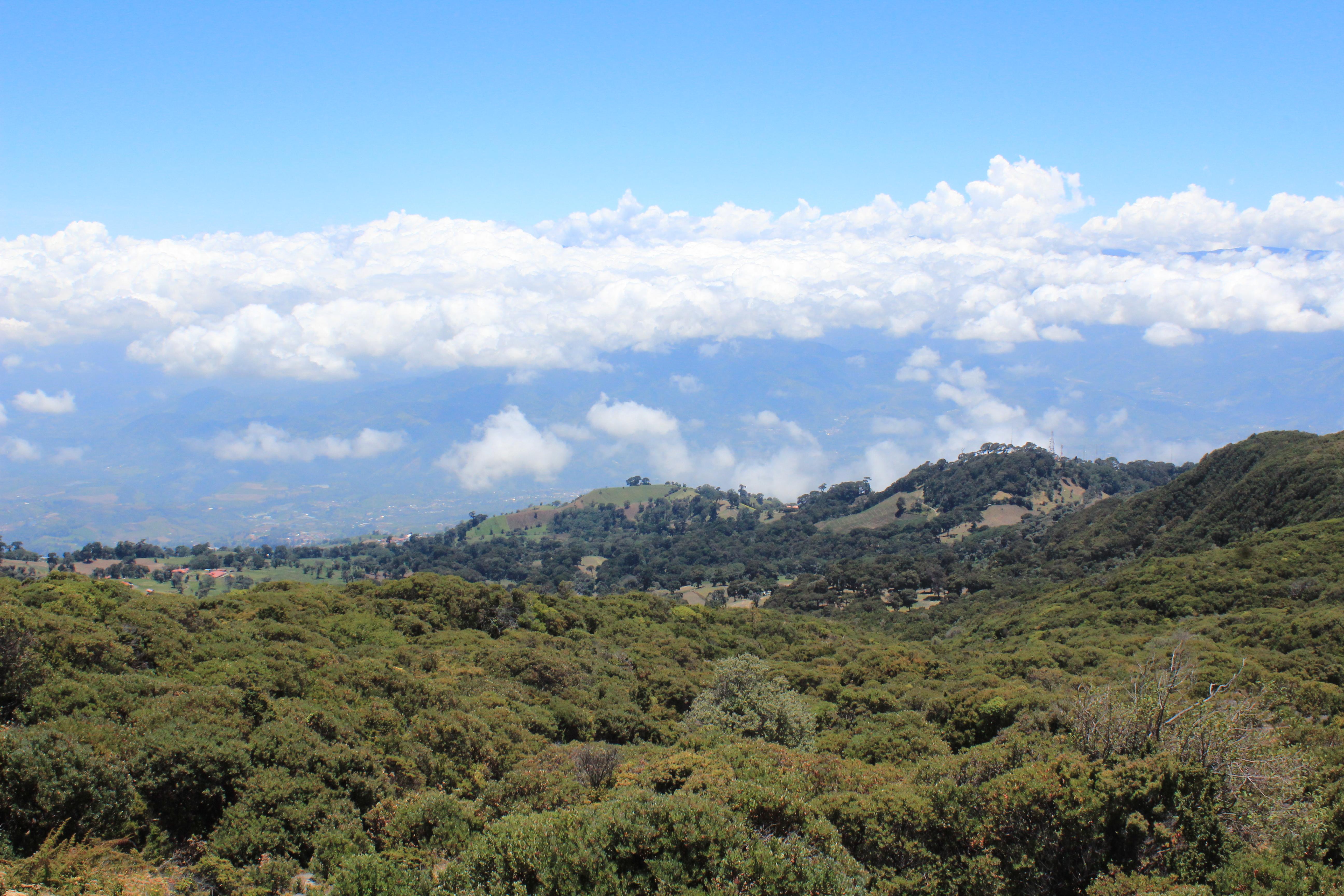 Klimawandel fördert Artenverlust in Tropenwäldern